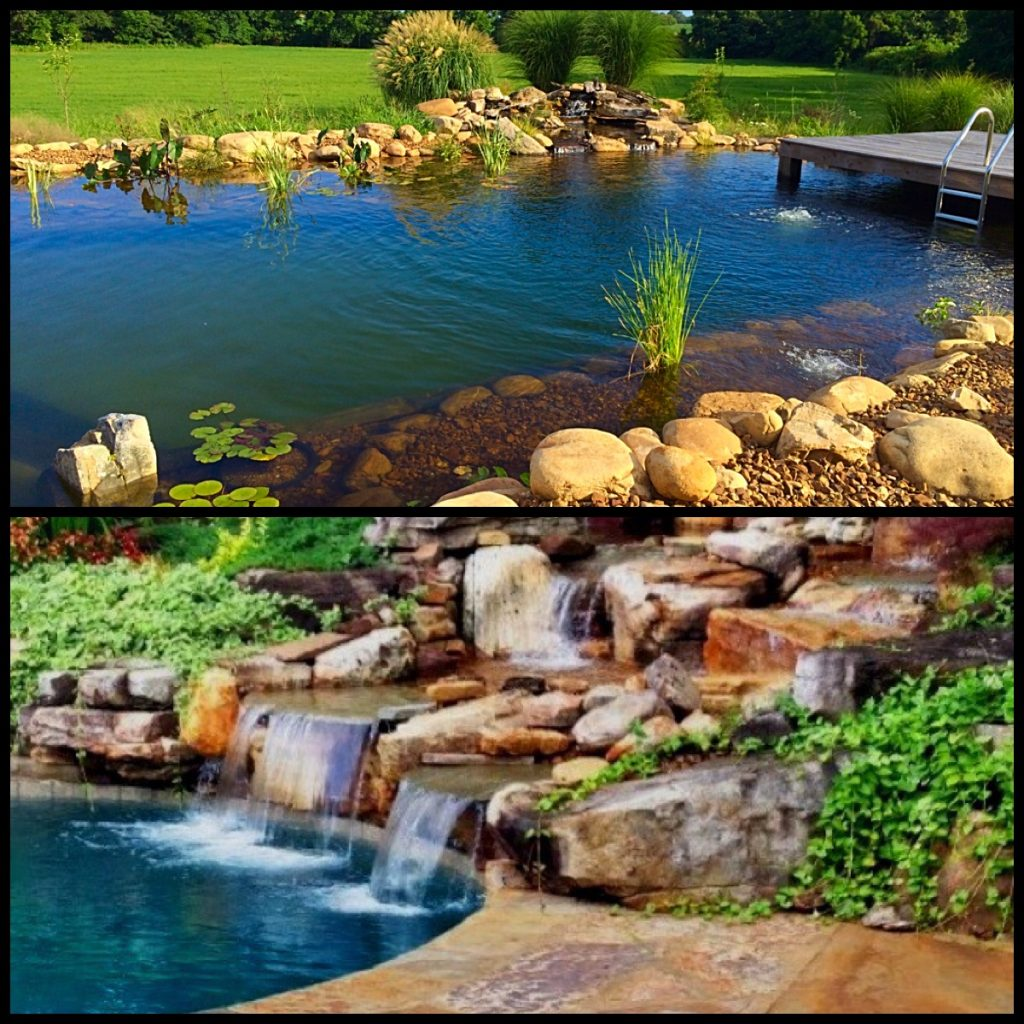 Recreational ponds natural swimming pools nsp carter for Koi pond natural swimming pool