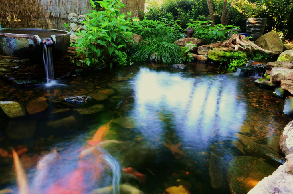 Water gardens koi ponds carter s nursery pond and for Garden pond specialists
